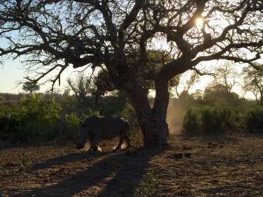 'Tijdens de spring break op safari door het Krugerpark.'