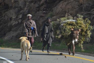 Een veelvoorkomend gezicht op de wegen in Lesotho: boeren en herders met ezels.